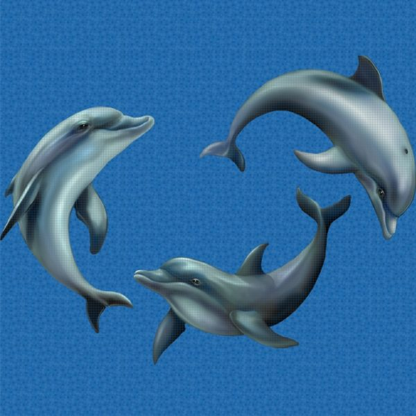 Playing Dolphins